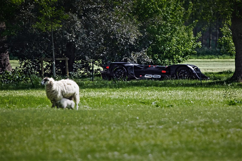 Roborace Robocar in Goodwood [Foto: Goodwood Media]